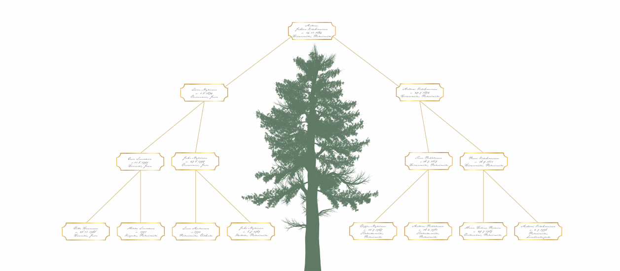 Sukupuu 1